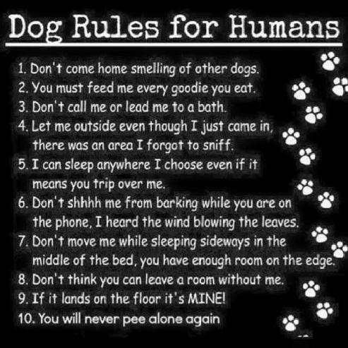 Dog rules for humans.jpg